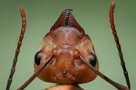 Detalle de la cabeza de una hormiga
