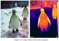Muestra de código de color en pingüinos de Faunia
